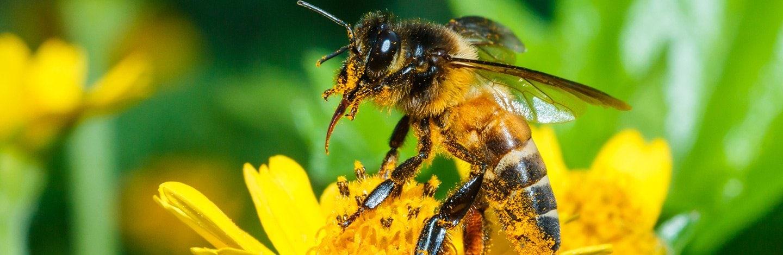 Bienen Auf Der Generalagentur D Dingen Die Mobiliar