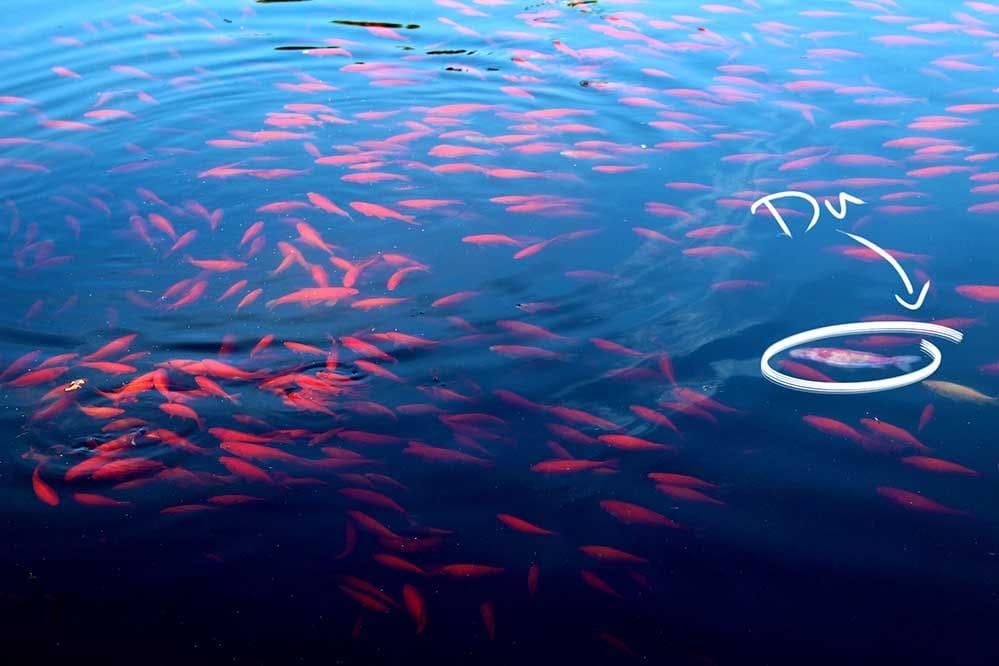 U fish dating